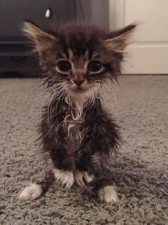 How To Give A Cat A Bath Cattime Cats Kittens Cute Cats