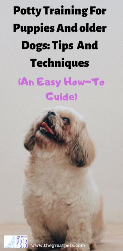 Potty Training Tips For Puppies And Older Dogs How To Guide