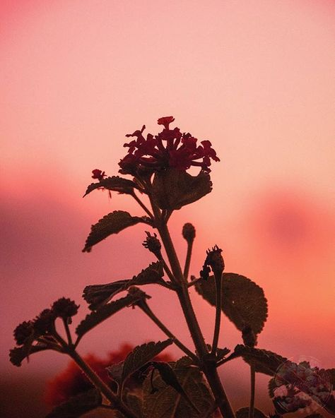 flowers #Sky #Red #Sun #Pink #Leaf...