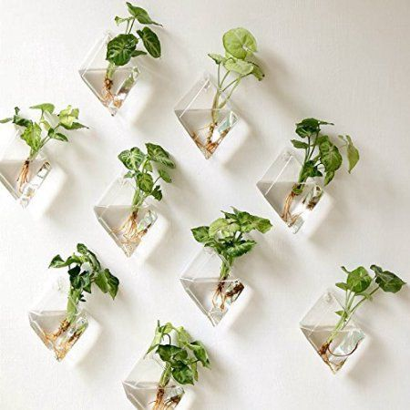 Mkono 2 Pack Wall Hanging Plant Terrarium Glass Planter, Diamond Fill with small plants, or other decorative objects and use as an eye-catching decorative accent for any space. Ideal for home, offi… Hanging Glass Planters, Hanging Air Plants, Hanging Plant Wall, Hanging Gardens, Diy Hanging, Hanging Baskets, Indoor Plant Wall, Wall Garden Indoor, Balcony Garden
