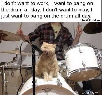 Pin By April Addington On Animal Memes In 2020 Animal Memes Night In The Wood Drums