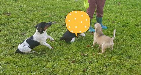 Lost Dog Micheldever Hampshire England United Kingdom L41230