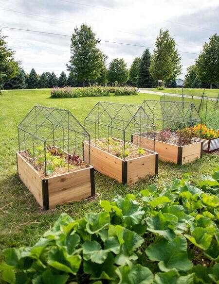 Chicken Wire Crop Coop Plant Protector Crop Cage Gardeners Com Vegetable Garden Design Garden Beds Raised Garden