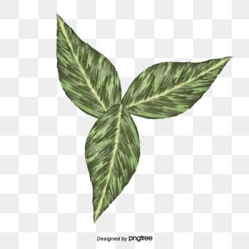 Hd Green Tea Leaves Green Leaves Tea Png Transparent Image And Clipart For Free Download Green Leaf Tea Leaf Clipart Watercolor Leaves