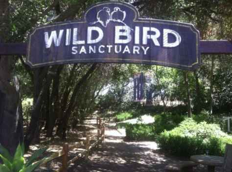 The Wild Bird Sanctuary at Myrtle Creek Gardens and Nursery located in the town of Fallbrook, CA Fallbrook California, California Beach, California Travel, Southern California, Hidden Places, Places To See, Myrtle Creek, Victoria Beach, Garden Nursery