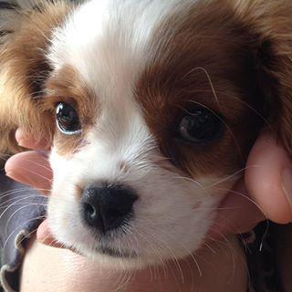 犬 新しい家族が増えました 犬 ペットロス ペット保険