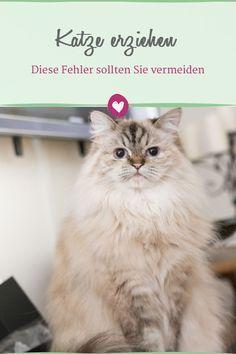 7 Todsunden In Der Katzenerziehung Katzen Katzen Erziehen