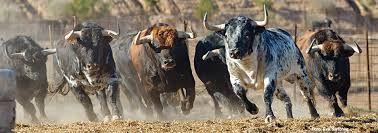 Resultado De Imagen De Manadas Toros En Campo Horses Animals Painting