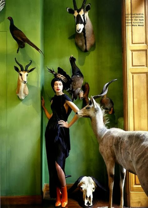 photo de mode : dans le magasin Deyrolle, Paris, par Ong-on Upa-in, pour Bazaar Thailand, novembre 2013, animaux empaillés, mur vert
