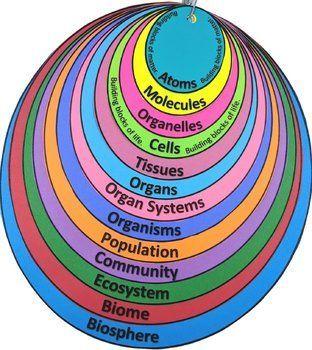 Levels Of Organization Student Note Organizer Biology Activity Student Organization Notes Organization