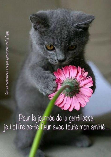 Pour la journée de la gentillesse, je t'offre cette fleur avec toute mon amitié... #journeedelagentillesse chat chaton mignon douceur fleur amitie