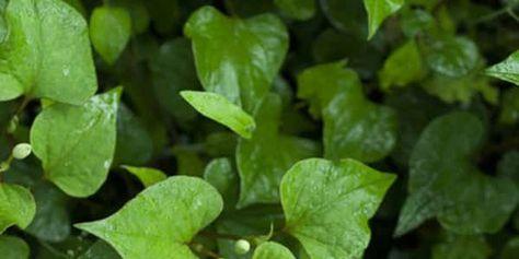 خلطة الجرجير للشعر 5 خلطات هندية ومغربية Vegetables Stuffed Peppers Spinach