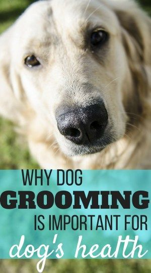 Why Grooming Is Important For The Health Of Your Dog Dog Grooming Dog Skin Care Dog Care Tips