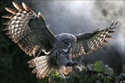 Feathered wings! I want my own pair. I want to be reincarnated as an owl.