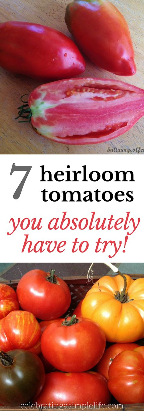 These seven heirloom tomato varieties are pure tomato heaven - have you tried them all? #heirloomtomatoes #tomatoes #gardening #heirloomvegetables