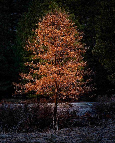 "TonyBaldasaroPhotography on Instagram: ""A little treat from Yosemite. • • • • • #tree #yosemite #yosemitenationalpark #yosemitevalley #intimatelandscape #instagood #igers"""