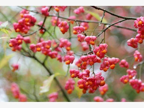 Die 10 Gefahrlichsten Giftpflanzen Im Garten Pflanzen Giftige Pflanzen Giftpflanzen