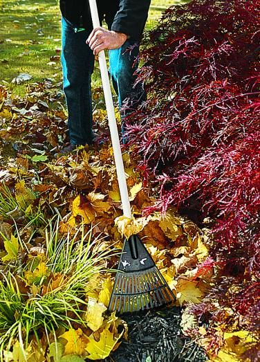 Smart Spring Yard Cleanup Spring Cleaning Yard Yard Cleanup