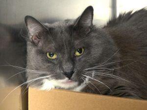 Shady 28861 Beautiful Cats Cat Love Cat Adoption