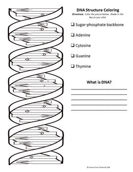 Dna The Double Helix Worksheet - worksheet