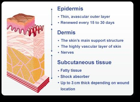 A wound is a disruption of the normal structure and function