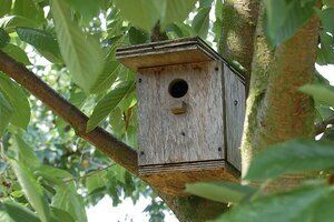 How To Hang A Birdhouse Tips On Location Mounting Placement In 2021 Bird Houses Bird House Bird House Kits