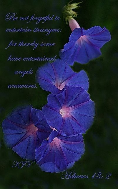 Pin By Ginger Rafferty On Aaa Jesus Verses Of The Bible Morning Glory Flowers Birth Flowers Planting Flowers