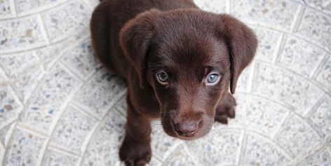 30 Cute Dog Love Quotes