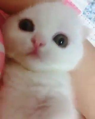 Süßeste Miezekatze <3