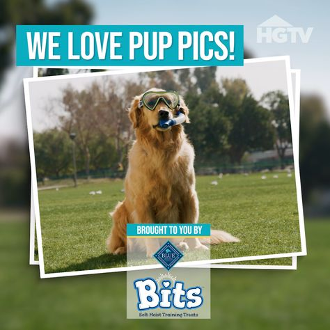 Give your good boy or girl something to smile about with our tips for snapping the perfect pet pic. 🐶 📸 Discover which dog breed is best for you when you follow this pin. 🐾 Sponsored by Blue Buffalo.