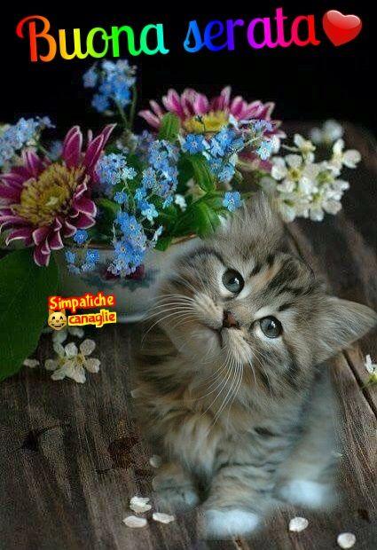 Buona Serata Good Evening Gatti Animali E Migliori Amici