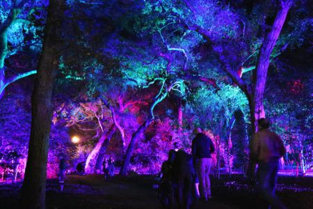 b9ae9f348105e93ab361eb45b43ceece - Enchanted Forest Of Lights At Descanso Gardens