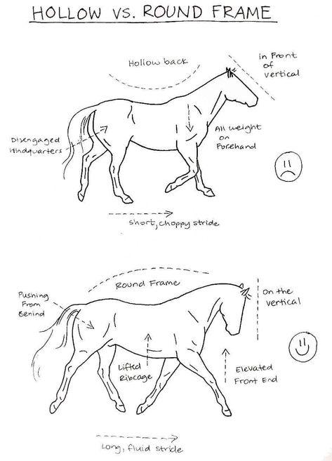 - Art Of Equitation Horse Riding Tips, Horse Tips, Horse Exercises, Horse Anatomy, Horse Facts, Horse Drawings, Horse Training, Horse Care, Show Horses