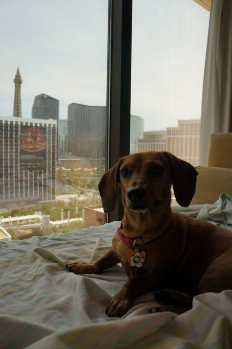 Destinations Archives Pet Friendly Las Vegas Las Vegas City Visit Las Vegas