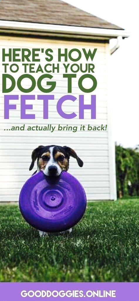 Dog Training Lessons Dog Training Outdoor Games Dog Training