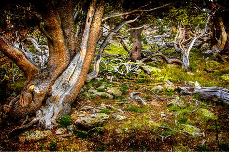 Merlin S Forest By Stephen K Miller On 500px Organic Architecture Landscape Photography Landscape