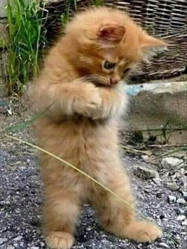 Nama Kucing Yg Bagus : kucing, bagus, Gambar, Kucing, Gemes, Inilah, Belajar, Lucu,, Kucing,, Gemas