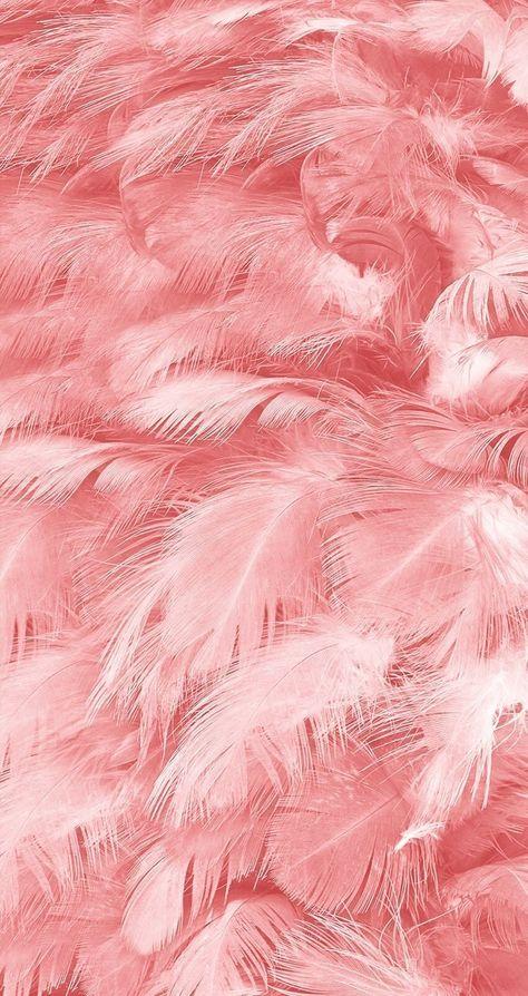 feather #pink - #Feather #inszenierung #pink