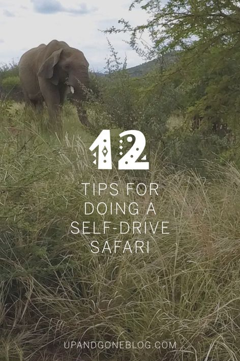 Tips for doing a self-drive safari in South Africa - Up and