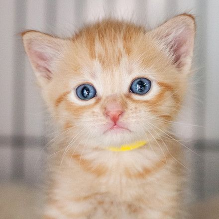 Kitten Rescue Of Mason County Is Dedicated To Placing Abandoned