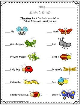 Insects Printable Worksheets