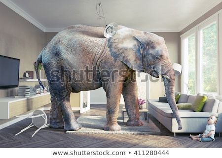 Big Elephant And The Baby In The Living Room Photo And Cg