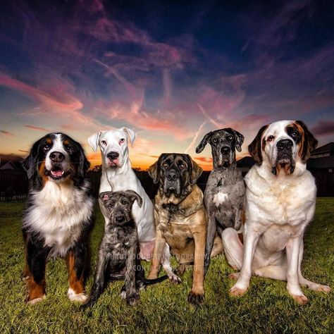 dallasdogphotographer And for one brief moment in...