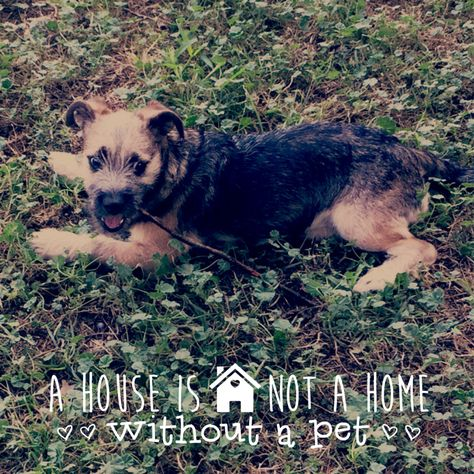 A House Is Not A Home Without A Dog Jesus Christ Dogs House