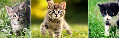 #kot #kotek #koty #kotki #cat #cats #kittens  #pictures #wallpapers #darmowetapetynapulpit #animals #zwierzeta #smieszne #cute #funny
