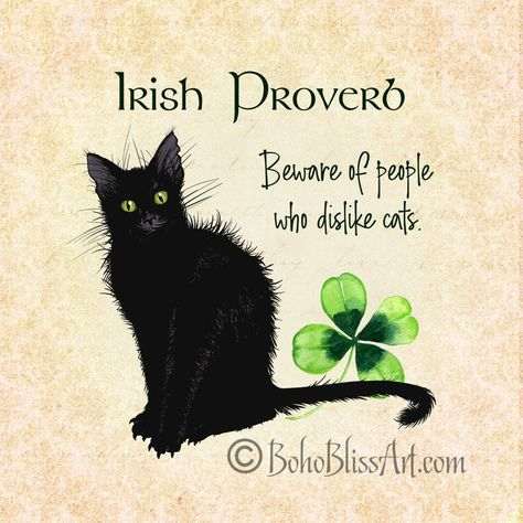 Irish Proverb: Beware of People Who Dislike Cats Choice of 4 Triquetra, Crazy Cat Lady, Crazy Cats, Irish Proverbs, Proverbs Quotes, Printed Magnets, Irish Quotes, Irish Sayings, Messages