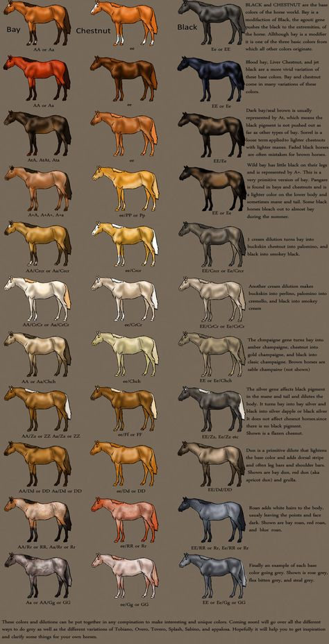 horse Color Chart by ~MagicWindsStables on deviantART actually acurate! alot of these charts are off or mistake a black bay for black All The Pretty Horses, Beautiful Horses, Animals Beautiful, Horse Color Chart, Colour Chart, Horse Coat Colors, Horse Information, Horse Anatomy, Horse Facts