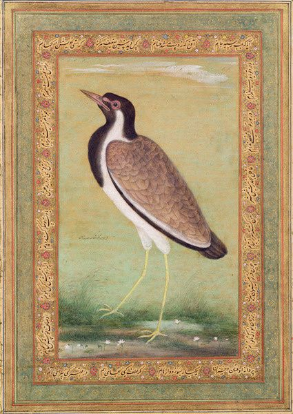 24c gold leaf border, original watercolor bird, home decor gifts Falcon Eagle Birds miniature Painting in Mughal style Antique vintage art