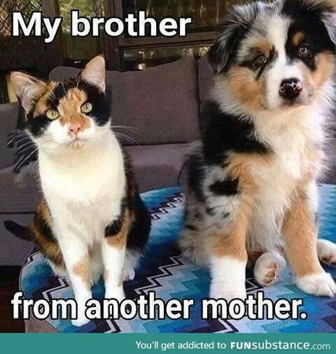 Brother from another mother...cat and dog siblings.