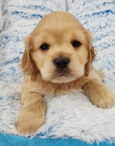 Puppies Are So Adorable Never Can I Have Just One Dog Pets Puppies Cute Puppies